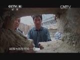 [牡丹]第二集 独立人间第一香 盛唐与日本的牡丹情
