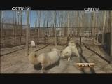 尹志江特种养殖生财有道,十八载养殖 用爱创财富