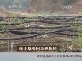 刘军养蚯蚓致富经,硕士毕业回乡养蚯蚓(20140410)