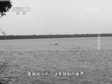"""《地理中国》 20140422 """"世界地球日""""特别节目-沼泽迷雾"""
