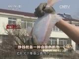 梁政远养鱼致富经,挣钱就靠一种会变色的鱼