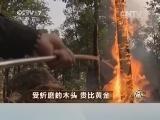 沈汝青沉香致富经,受折磨的木头 贵比黄金(20140425)