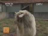 [农广天地]马头山羊养殖技术(20140520)