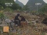 [农广天地]王顺香的养牛路--关岭牛养殖(20140528)