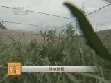 [农广天地]冠鹤养殖技术(20140611)