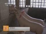 [农广天地]龙宝1号猪配套系养殖技术(20140708)