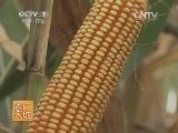 [农广天地]玉米螟绿色防控技术(20140709)