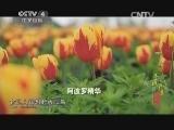 《寻找最美花园》 20140719 大丰花海