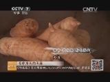 [科技苑]专吃木头的天麻(20140721)
