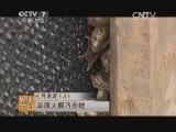 [每日农经]草原大棚巧养蛙(20140722)