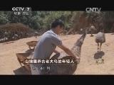 陈跃洲养鸟致富经,山坳里养古老大鸟的年轻人