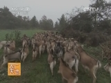 养羊技术农广天地,古蔺马羊养殖技术