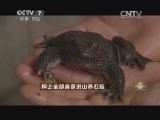 叶世雄养石蛙致富经,押上全部身家进山养石蛙(20140924)