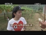吴玲玲生态农业致富经,女汉子用5000万养老金拼一把