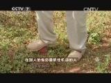 张习民种桃致富经,在别人的抱怨里抓住机遇的人(20141117)