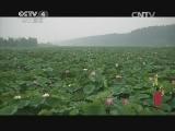 《寻找最美花园》 20141207 台儿庄运河湿地公园:大运河边的万亩荷塘