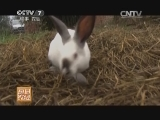 20150114 一年八窝 伊普吕兔抢占市场