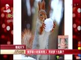 俄罗斯小松鼠堆雪人 用胡萝卜当鼻子
