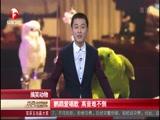 搞笑动物:鹦鹉爱唱歌 高音难不倒 00:01:18