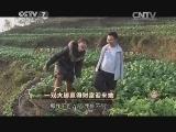 吴晓凡养鸡致富经,一双大脚赢得财富迎来她(20150312)