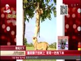 [每日新闻报]微观天下:申博 申博官网