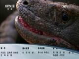 《生命》第二集 爬行类和两栖类动物 00:47:57