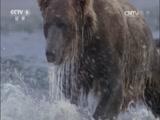 《生命》第七集 猎人与猎物 00:47:43