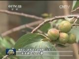 """《根据地》晋察冀边区""""树叶训令"""":宁可饿肚子 不与民争食"""