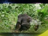 《自然传奇》 20151003 终极动物倒计时(4)