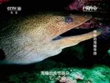《自然传奇》 20160107 神秘的海鳗帝国