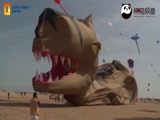 恐龙风筝从准备放飞到放飞失败