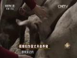 《致富经》 20160517 倔媳妇为留丈夫去养猪