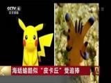 """[中国新闻]海蛞蝓酷似""""皮卡丘""""受追捧"""