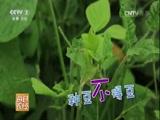 20160826 昆虫菜单:豆青虫 你敢吃吗来源:央视网2016年08月26日 22:36