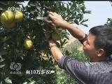 [视频]小脐橙推动大产业