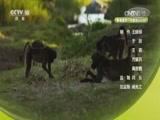 探秘自然·狒狒王国的迁徙 00:58:48