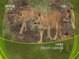探秘自然·大猫的故事 00:58:39