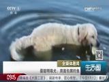 最聪明萌犬用面包屑钓鱼