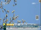[第一时间]安徽:春风又绿江南岸 采石矶头红梅赞