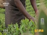 [远方的家]一带一路(120)斯里兰卡 高山茶场闻茶香