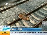 广东肇庆 闯祸的风筝 风筝一个月两次逼停城轨
