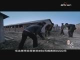 《再说长江》 第十六集 他乡故乡