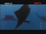 《魅力纪录》 20120419 生命 第四集 鱼
