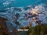 《中国影像方志》 第41集 河南新安篇 00:39:49