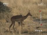 《动物世界》 20180418 旱季极限生存战