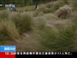 """[新闻30分]浙江杭州粉黛乱子草花园被毁 不幸成""""网红"""" 不到三天就被毁"""