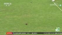 [综合]2018年中国国际木球公开赛贵州开赛(晨报)