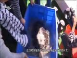 文明点赞:关爱水生动物 共建和谐家园 文明论坛 2018.11.11 - 厦门电视台 00:09:04