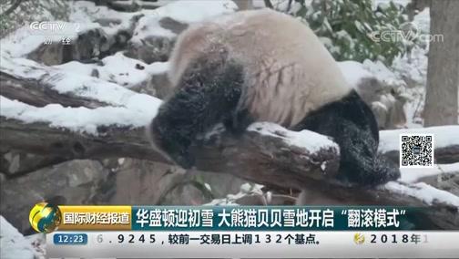 """[国际财经报道]华盛顿迎初雪 大熊猫贝贝雪地开启""""翻滚模式"""""""
