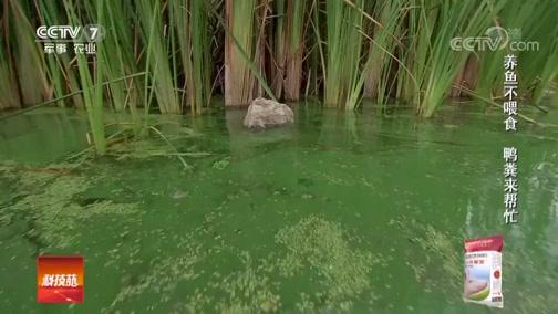 《科技苑》 20181119 角蛙 泥鳅 绿头鸭 都有一个好搭档